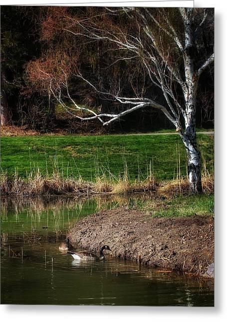 Geese Pool Tree Greeting Card by Buck Buchanan