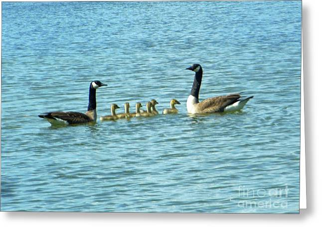 Geese Proud Parents Greeting Card