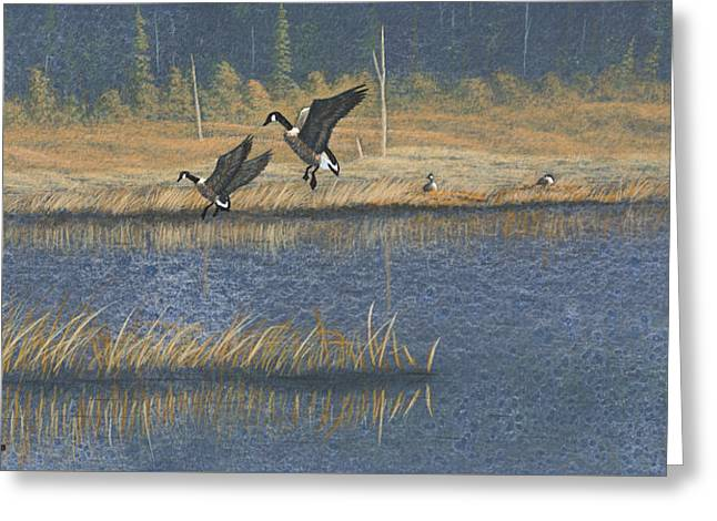 Geese Greeting Card by Richard Faulkner