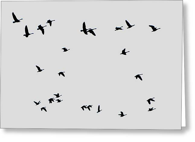 Geese Taking Off Greeting Card by Richard Singleton
