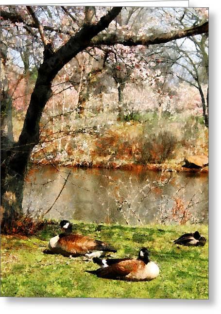 Geese Under Flowering Tree Closeup Greeting Card by Susan Savad
