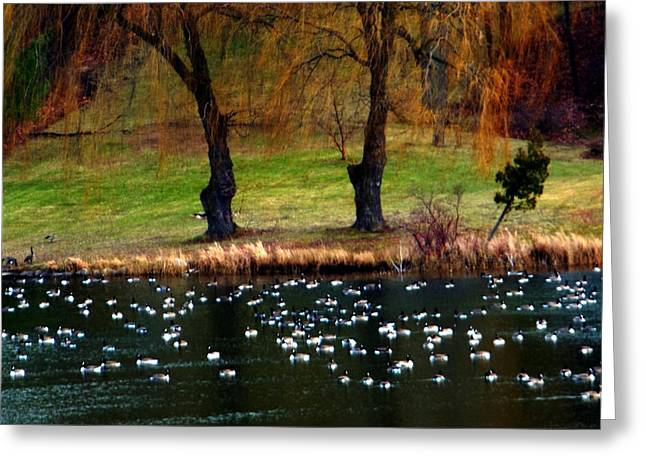 Geese Weeping Willows Greeting Card