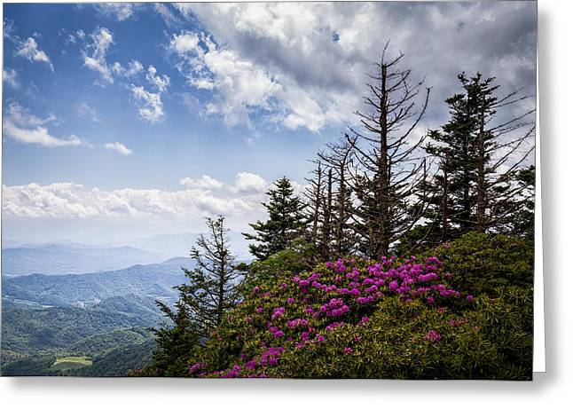 Rhododendrons - Roan Mountain Greeting Card