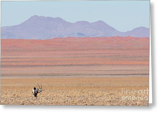 Greeting Card featuring the photograph Gemsbok In Desert Scene by Brenda Tharp