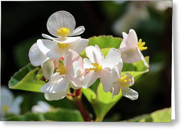 Gentle Bloom Greeting Card