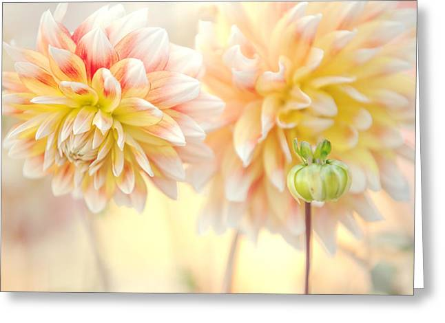 Gentle Dahlias  Greeting Card by Jenny Rainbow