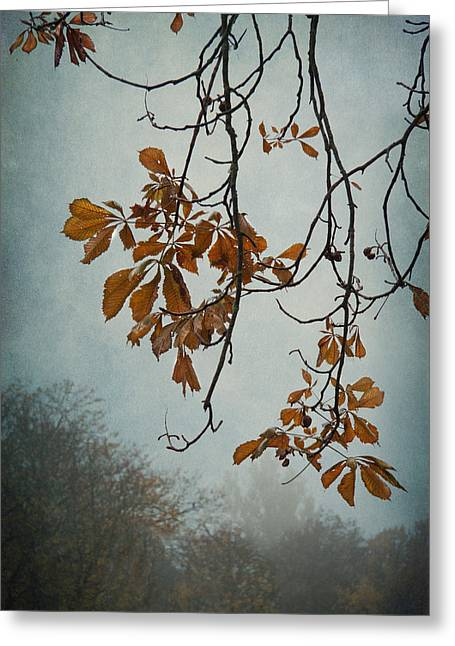 Gentle Fall  Greeting Card by Maggie Terlecki