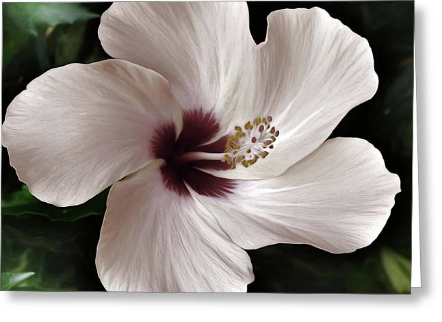 Gentle Hibiscus Greeting Card by Georgiana Romanovna