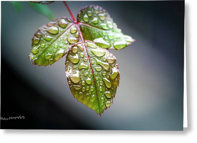 Gentle Rain Drops Greeting Card
