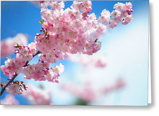 Gentle Spring Arrival Greeting Card by Jenny Rainbow