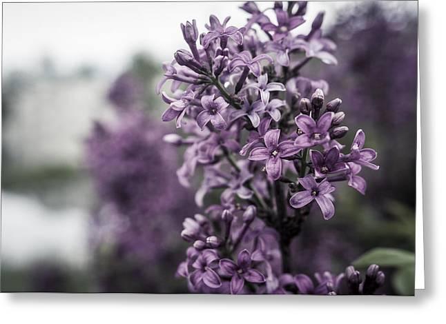 Gentle Spring Breeze Greeting Card