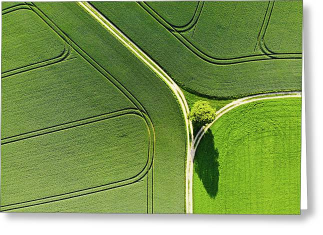 Geometric Landscape 05 Tree And Green Fields Aerial View Greeting Card