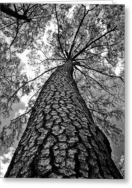 Georgia Pine Greeting Card by Dan Wells