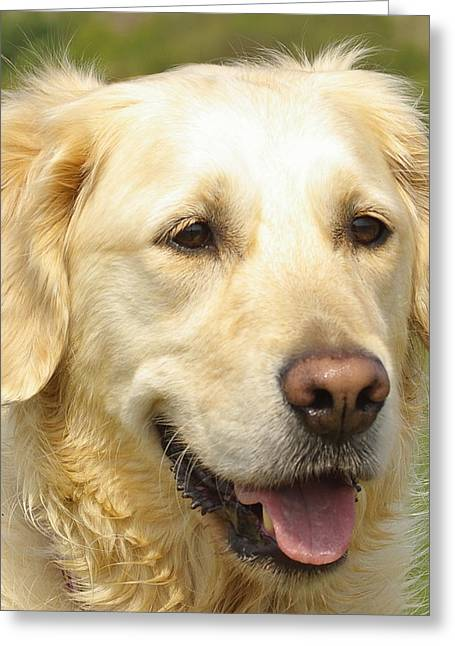 Georgie The Golden Retriever Greeting Card by Hilary Burt