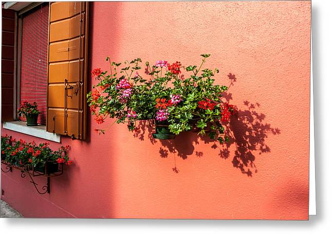 Geranium And Window Greeting Card by Peter Tellone
