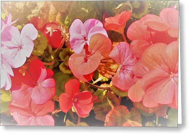 Geranium Greeting Card by Ann Johndro-Collins