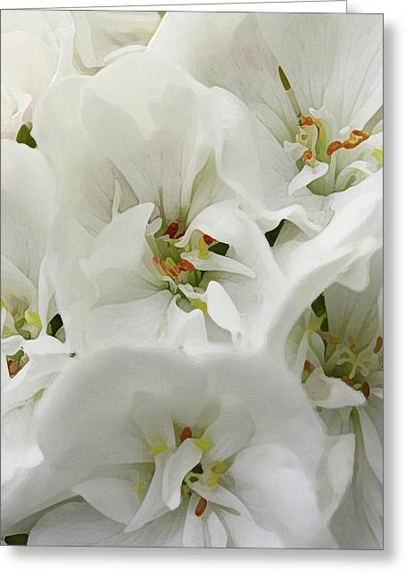Geranium Wears White Greeting Card by Amy Neal