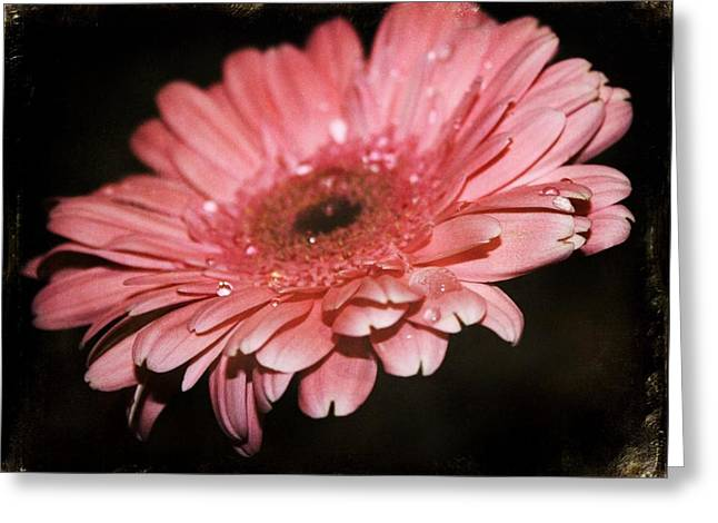 Gerber Greeting Card by Cathie Tyler