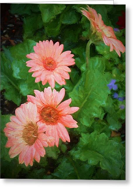 Gerber Daisies - Digital Art Greeting Card by TN Fairey