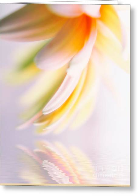 Gerbera Angel 2 Greeting Card by SK Pfphotography