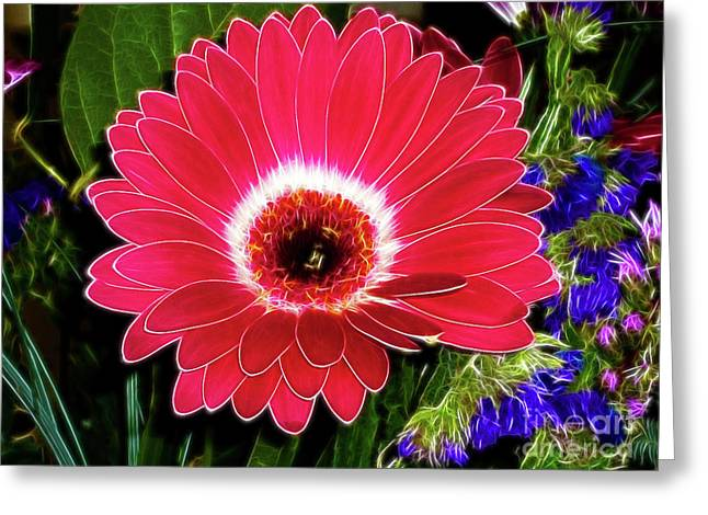 Gerbera Bella Greeting Card