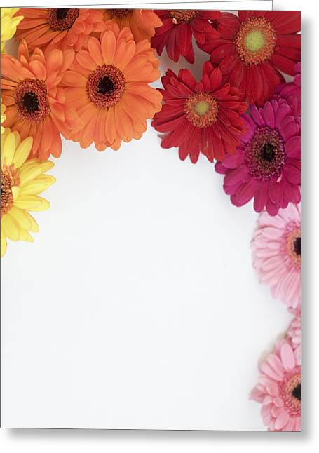 Gerbera Blooms Framed Greeting Card