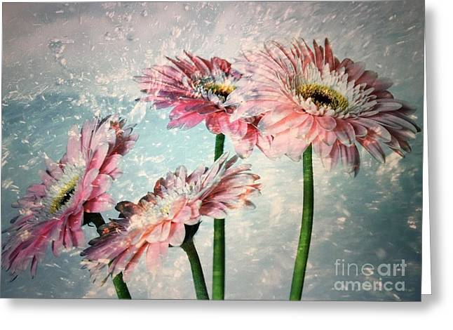 Gerbera Daisies With A Splash Greeting Card