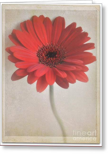 Greeting Card featuring the photograph Gerbera Daisy by Lyn Randle