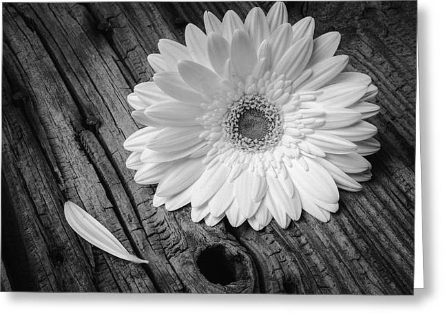 Gerbera Daisy On Old Wood Greeting Card by Garry Gay