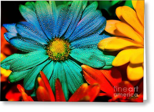 Gerbera Daisy Greeting Card