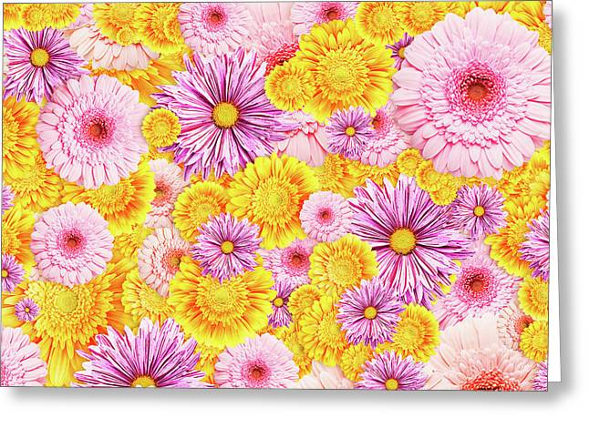 Gerbera Flowers Greeting Card by Vadim Goodwill