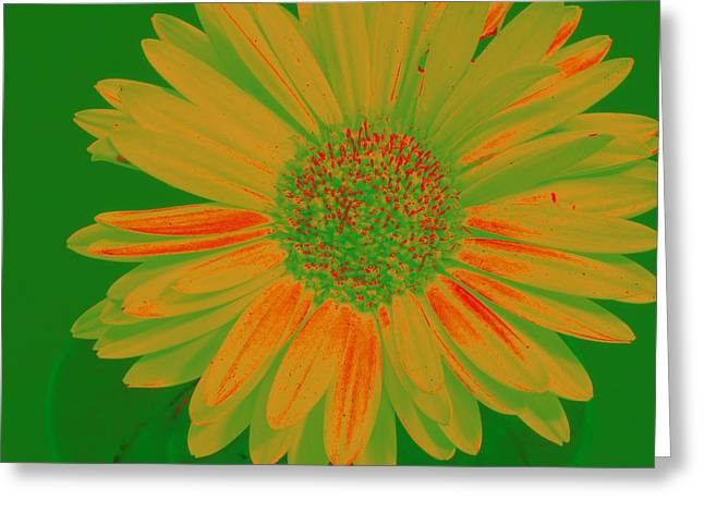 Greeting Card featuring the photograph Gerbia Daisy Sabattier by Bill Barber