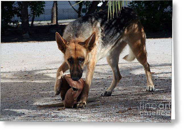 German Shepherd Playing Greeting Card by Andre Goncalves