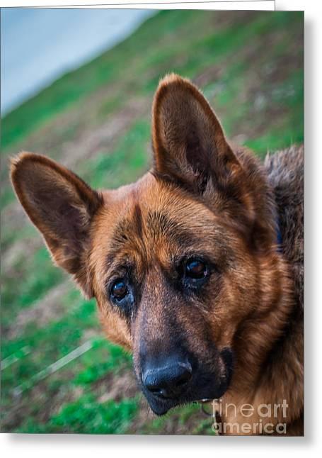 German Shepherd Profile Greeting Card
