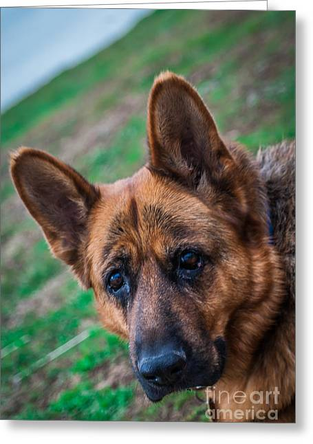German Shepherd Profile Greeting Card