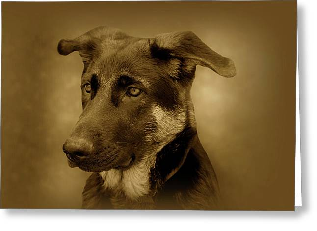 Indiana Art Greeting Cards - German Shepherd Pup Greeting Card by Sandy Keeton