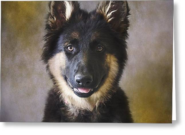 German Shepherd Puppy Portrait Greeting Card by Wolf Shadow  Photography