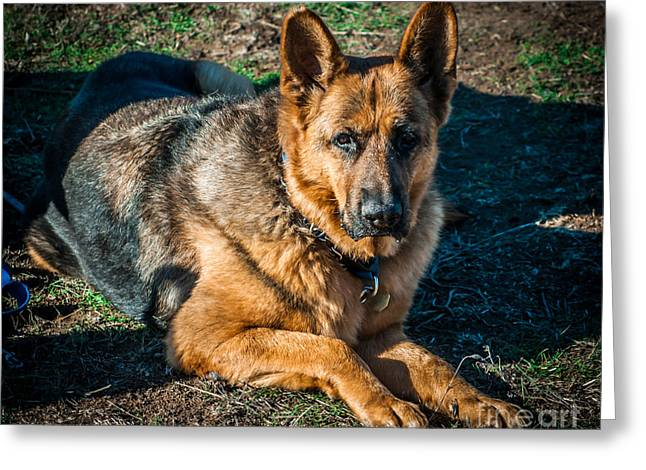 German Shepherd Sonoma Coast Greeting Card