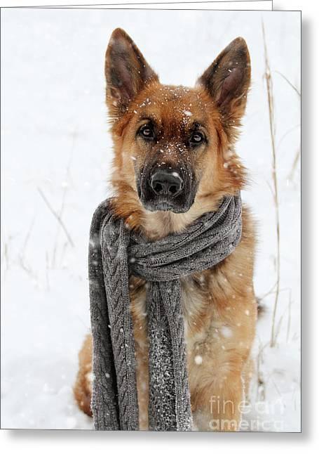 German Shepherd Wearing Scarf In Snow Greeting Card