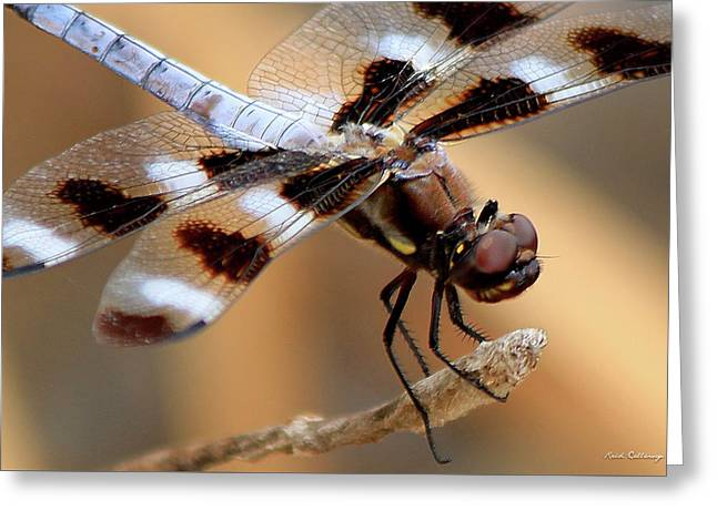 Get A Grip Dragonfly Close Up Art Greeting Card