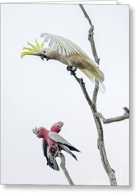Get Off My Perch Greeting Card