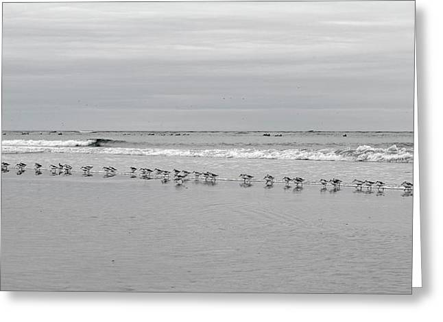 Get Your Ducks In A Row Greeting Card by Betsy Knapp