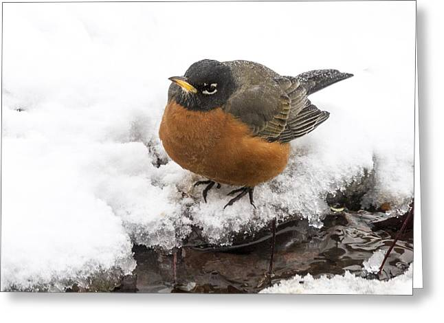 Getting Cold Feet Greeting Card