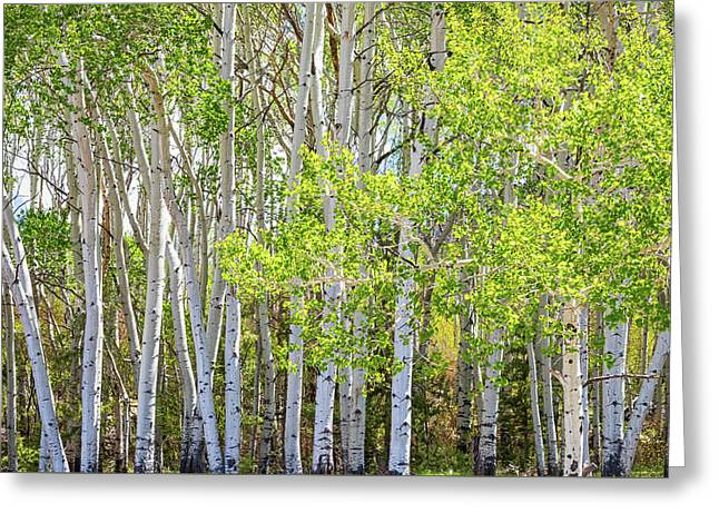 Getting Lost In The Wilderness Greeting Card by James BO Insogna