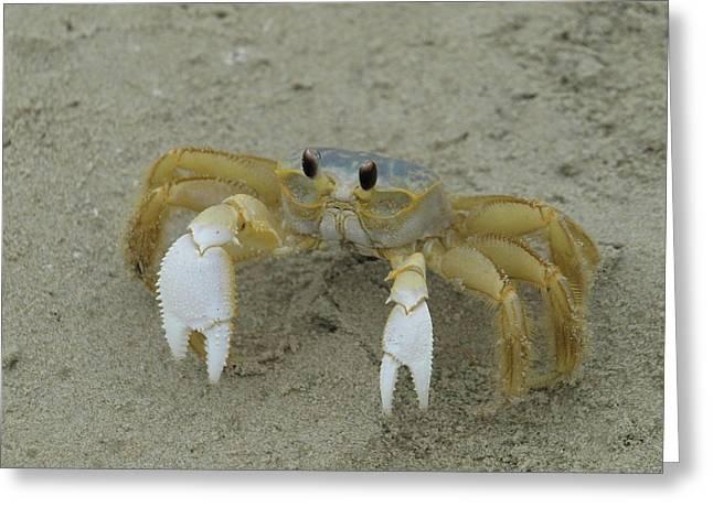 Ghost Crab - 1 Greeting Card