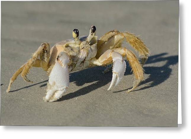 Greeting Card featuring the photograph Ghost Crab by Bradford Martin