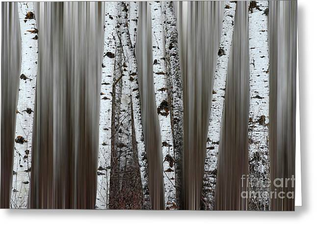 Ghost Forest 1 Greeting Card by Bob Christopher