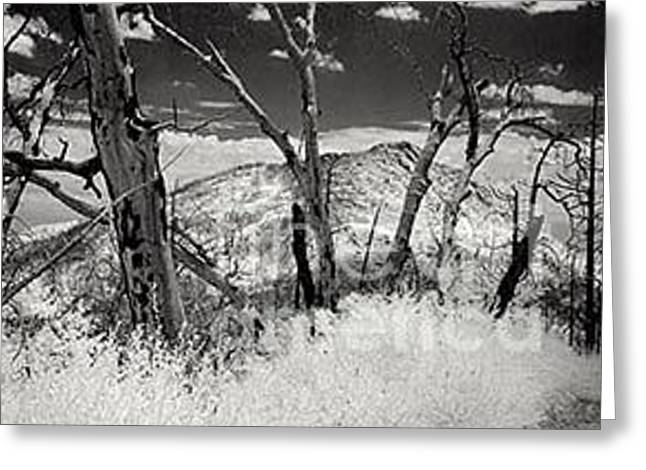 Ghost Forest Greeting Card by Eileen Mandell