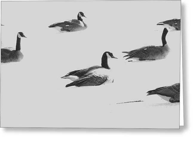 Ghost Geese Over Beverly Hills Greeting Card by Todd Sherlock