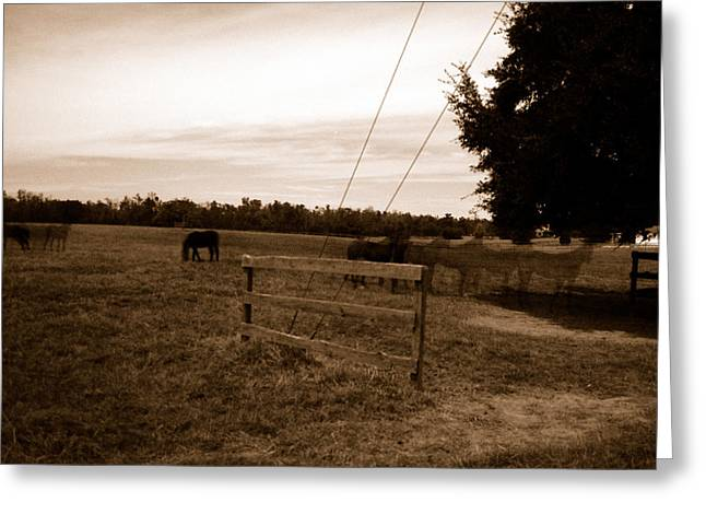 Ghost Horses Of Huckleberry Lane Greeting Card